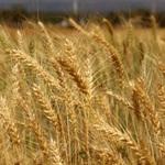 Horúce témy pre poľnohospodárov