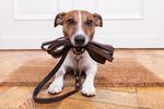 Elektronický ohradník pre psov má široké využitie