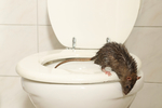 Znepríjemňujú vám život rôzne zvieratá? Odplašte ich účinným spôsobom