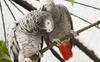 Zaujímavosti o papagájoch, ktoré vás prekvapia