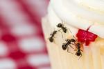 mravce.jpg