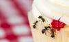 Zbaviť sa mravcov je náročné, ale nie nemožné