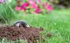 Spustošená záhradka od krtka? Takto si sním hravo poradíte