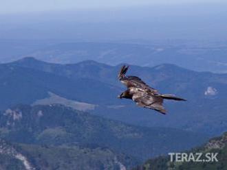 Na Slovensku zaznamenali nové vtáčie druhy