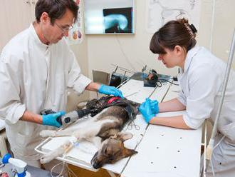 Operácie zvierat bez narkózy nebudú