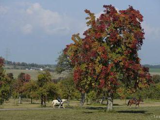 Prostredníctvom envirorekordu chcú vrátiť stromy do krajiny