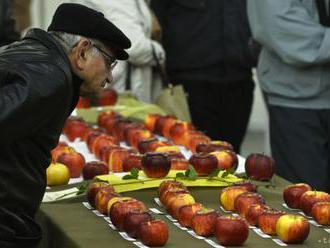 Najkrajšie jablko Slovenska je Bohemia z Kláštora pod Znievom