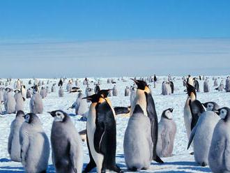 Antarktída bije na poplach: Uhynuli tisíce mláďat tučniakov, prežili len dve