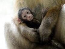 V košickej Zoo sa tešia novému prírastku: Uskutoční sa aj slávnostný krst