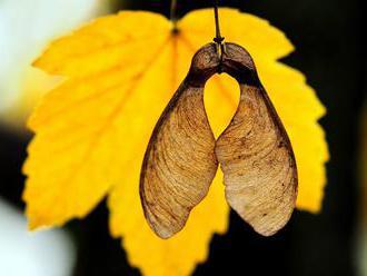 Streda príjemným jesenným počasím zlomí stred týždňa