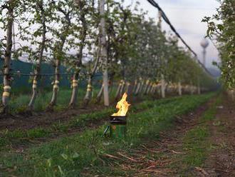 Kritickú mrazivú noc zo štvrtka nadnes ovocinári zvládli