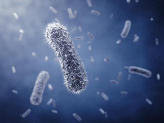 V púštnom prachu z Afriky našli početné mikroorganizmy