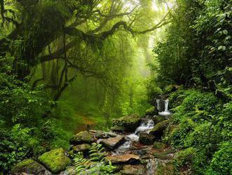 Na Zemi rastie 60 065 známych druhov stromov