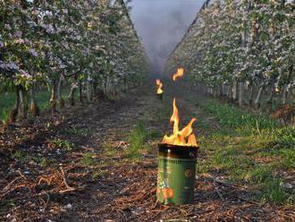 Ovocinári zvládli prízemné mrazy, na nepriazeň počasia sa pripravili
