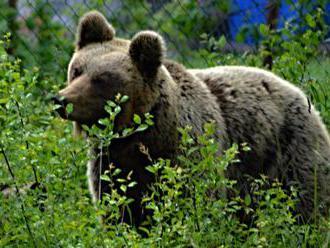 Zastrelená medvedica Ingrid: Šokujúce vyhlásenie maďarskej rezervácie