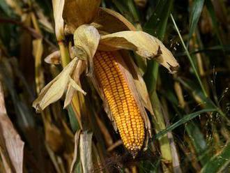 Čína sa zamerala na potravinovú sebestačnosť, za miliardy nakupuje semená z celého sveta