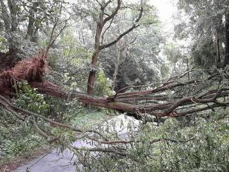 Tragédia u našich susedov: Strom spadol do skautského tábora, zabil dievčatá
