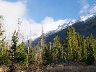 Lesy sú pre zdravé prostredie dôležité, sú však jediným zdrojom dreva, upozorňujú lesníci