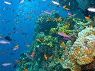 Koralové útesy neohrozujú len klimatické zmeny, ale aj potkany