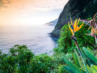 Madeira   jedna veľká zakvitnutá záhrada
