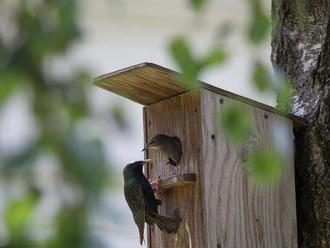 Před zimou prohlédněte a opravte ptačí budky