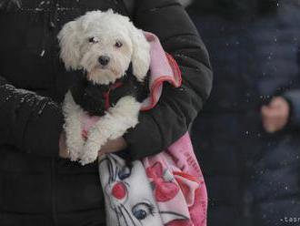 Na výstave psov Nitradog o cenu súťaží päť slovenských plemien