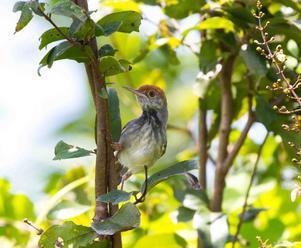 Desiatky krajín sa zaviazali k ochrane sťahovavého vodného vtáctva