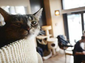 V Poprade otvoria klub, v ktorom budú hosťom robiť spoločnosť mačky
