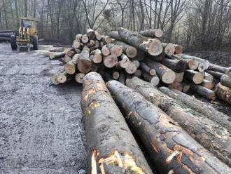 Elektronické aukcie dreva Lesov SR nevyvolali očakávaný záujem