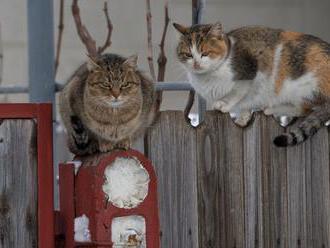 Túlavé mačky môžu byť pre ľudí prínosom, treba ich však vykastrovať