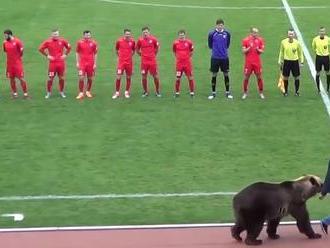 VIDEO: Ruský klub čelí kritike, ochrancov zvierat pobúril medveď na zápase