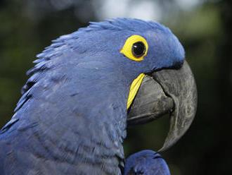 Odkaz MMŠ: O múdrom papagájovi, ktorý robil spoločnosť americkej spisovateľke