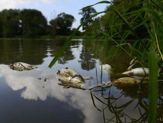 BVS odmieta, že by jej čistička spôsobila úhyn rýb v Malom Dunaji