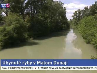 V Malom Dunaji hynú ryby, podľa inšpekcie je dôvodom nedostatok kyslíka
