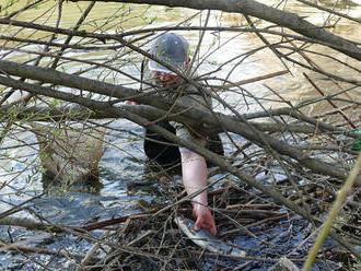 Odborníci zistili, čo malo spôsobiť úhyn rýb v Malom Dunaji