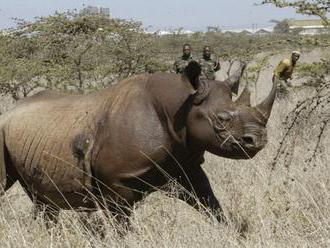 DOBRÝ ÚMYSEL SKONČIL ZLE: V Keni uhynulo osem vzácnych nosorožcov