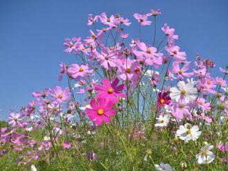 Louka vdechne zahradě nespoutanost přírody
