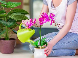 8 tipov, ako sa správne starať oorchideu