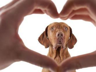 Dokážu nás zvieratá naozaj milovať ako my ich?