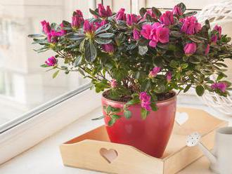 Nenáročné pokojovky, které kvetou v zimě