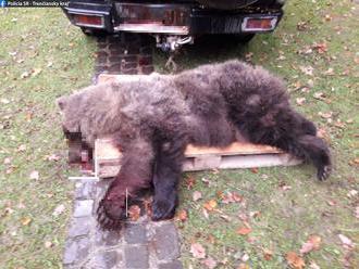 Foto: Medveď vybehol z lesa, vodič dodávky už zrážke nedokázal zabrániť
