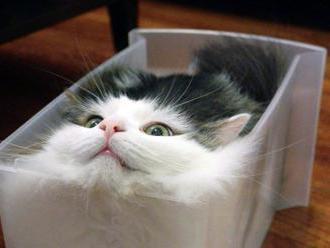 Tam, kde sa mačka liala a voda mňaukala