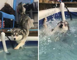 Občas sú psy idioti, ale aj tak ich milujeme!