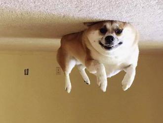 Psie balóny uleteli a uviazli na strope. Alebo je všetko naopak?
