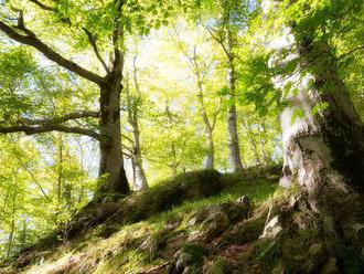 V Rumunsku našli v rokline telo horára, ktorý bojoval proti ilegálnej ťažbe dreva
