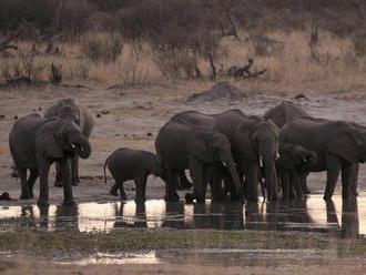 V národnom parku v Zimbabwe uhynulo za dva mesiace najmenej 55 slonov