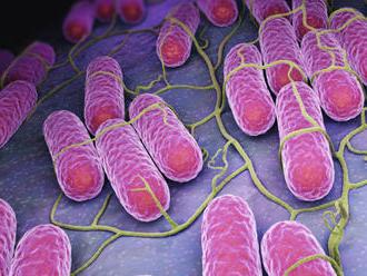 Banskobystrický kraj ohrozujú viaceré choroby: Rozmohla sa salmonelóza a dokonca aj svrab