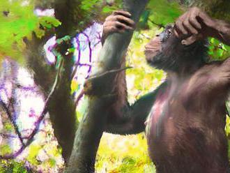 Predchodcovia človeka začali kráčať vzpriamene skôr, ako sa predpokladalo
