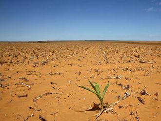 Tretine tropických rastlín hrozí zánik