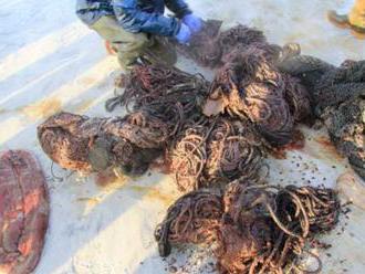 Uhynutý vorvaň mal v žalúdku 100 kilogramov odpadkov